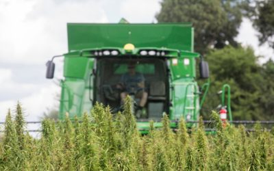 Selecting Among Hemp Harvesting Methods