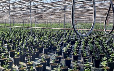 HNP's Hemp Seed Propagation Capabilities