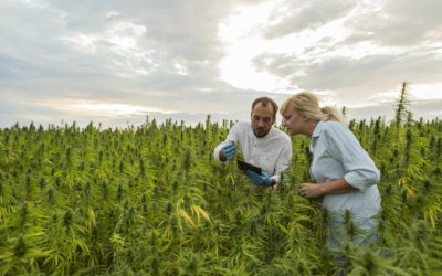 'Hemp in the Heartland' Webinar Recap: Quality Should Come First in Nebraska Hemp Farming